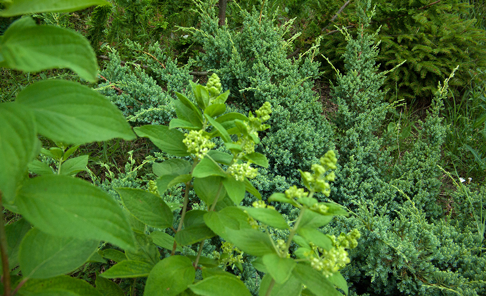 Фотография зеленый сад. Материал с курса Ландшафтный дизайн